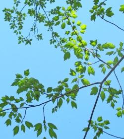 leaves 002